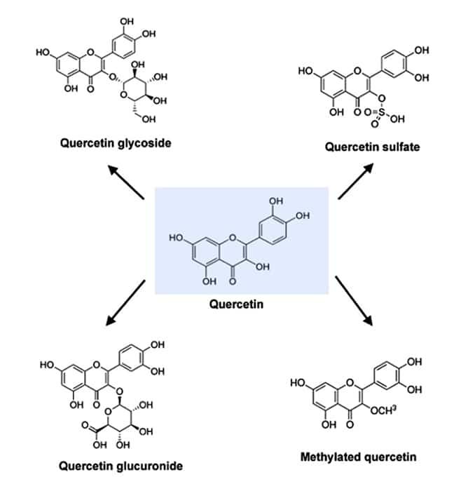 Quercétine et flavonoides
