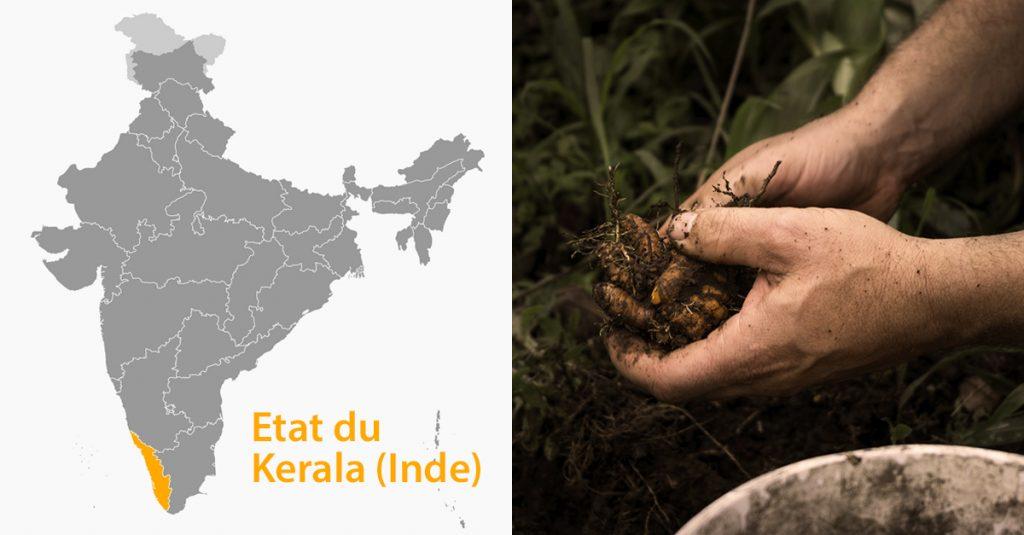 Culture du curcuma dans la région du Kerala en Inde - Nutrixeal Info