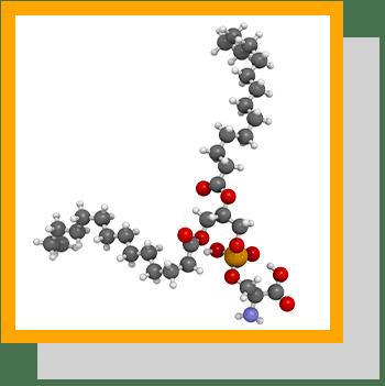 Phosphatidylserine index nutraceutique Nutrixeal Info 2