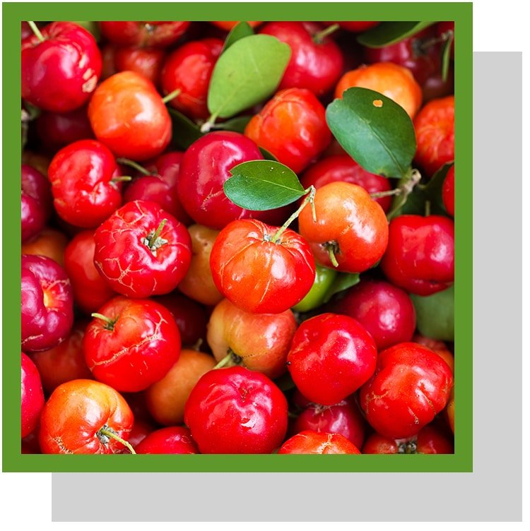 acérola vitamine C Nutrixeal Info