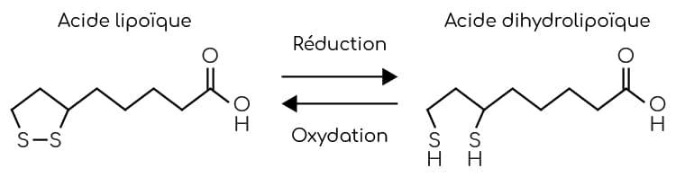 Acide lipoïque forme oxydée et réduite nutrixeal Info