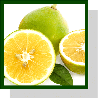 bergamote index nutraceutique Nutrixeal Info
