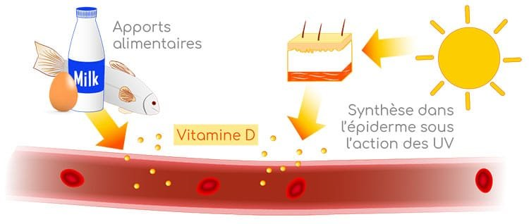 sources de vitamine D nutrixeal Info