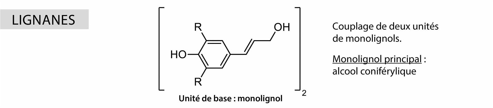 Lignanes Nutrixeal Info