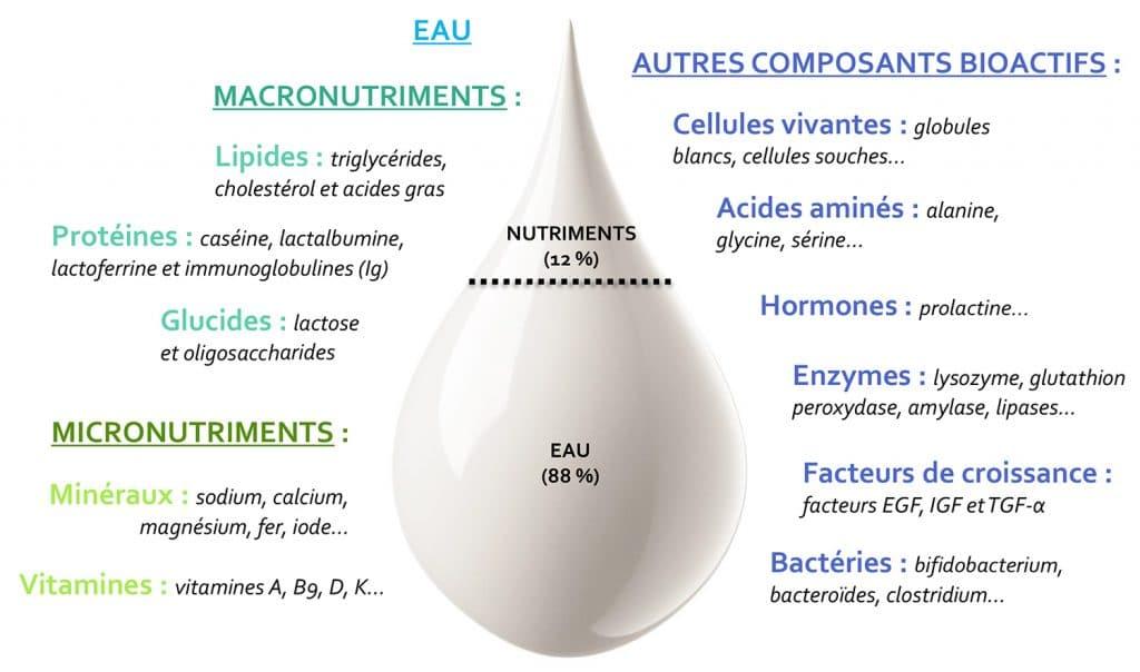 principaux composants du lait maternel Nutrixeal Info