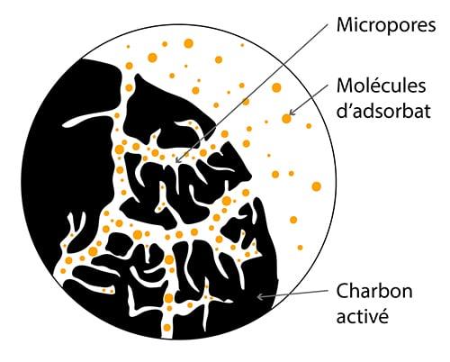 La structure poreuse du charbon vegetal activé lui confère sa capacité d'adsorption.
