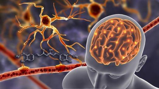 curcumine et barriere hemato-encephalique sur nutrixeal info