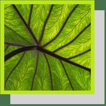chlorophylline index nutraceutique Nutrixeal Info