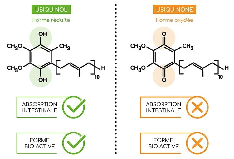 L'ubiquinone présente une efficacité bien plus faible que l'ubiquinol, forme réduite bio active.