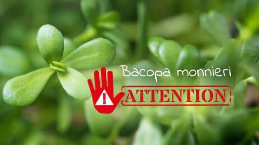 Bacopa monnieri alerte qualité Nutrixeal Info