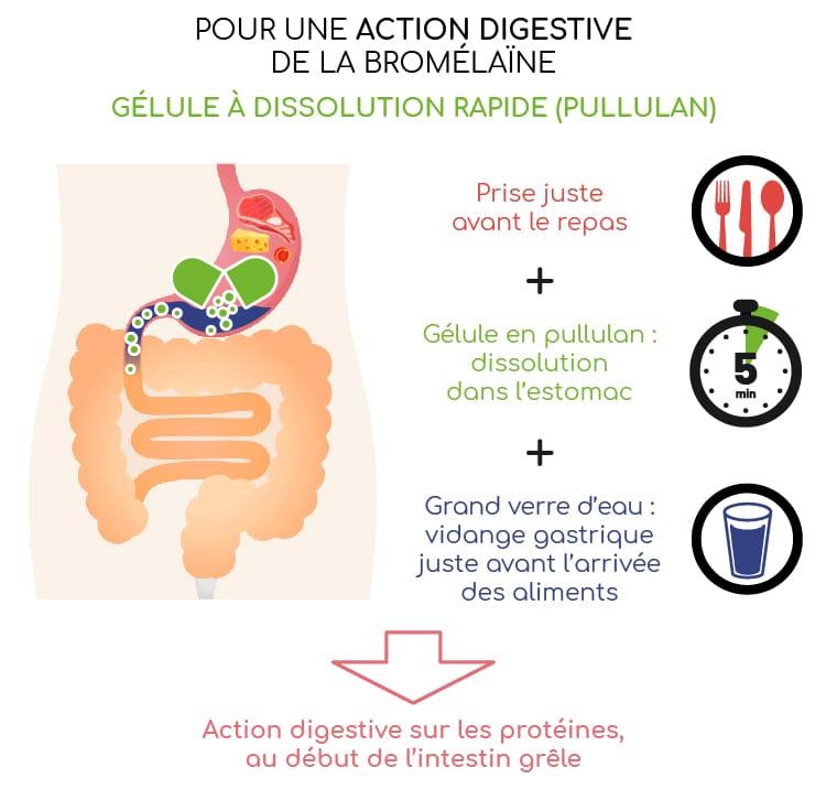Bromélaïne pour une action digestive : gélule à dissolution rapide.