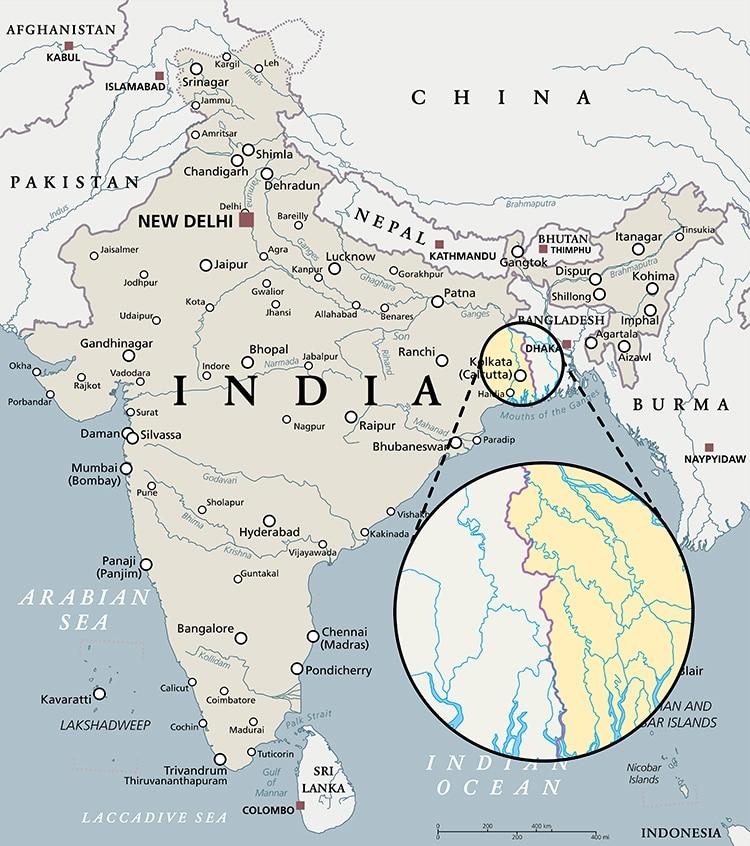 La Bacopa pousse particulièrement à l'est de l'Inde dans une zone très marécageuse.