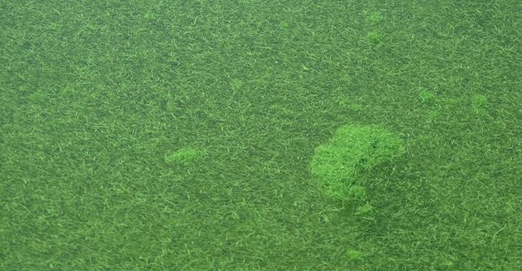 Algue Klamath à la surface du lac Klamath (Oregon).