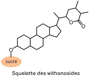 squelette withanosides Ashwagandha Nutrixeal Info