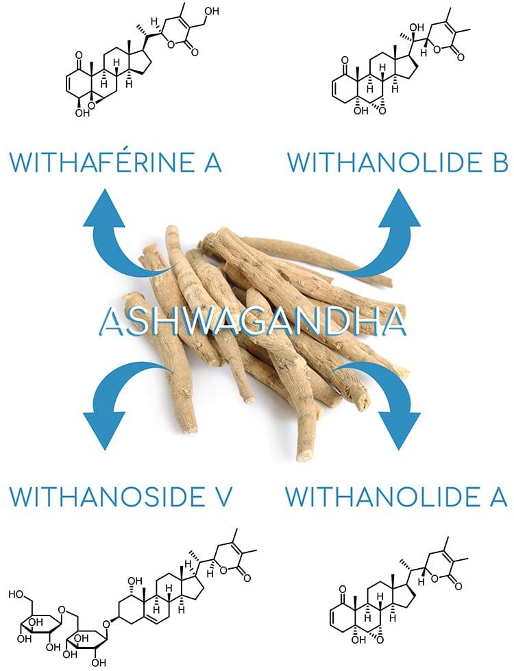 Ashwagandha : withanolides majoritaires.