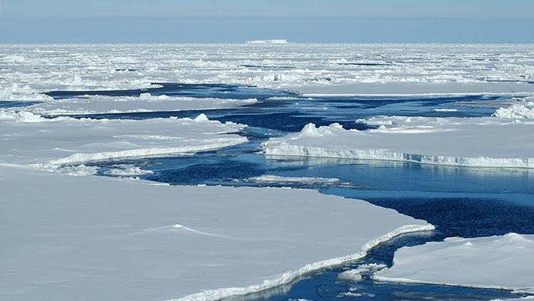 rechauffement climatique fonte banquise et rarefaction du krill