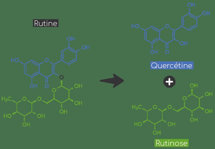 rutine hydrolyse quercetine rutinose