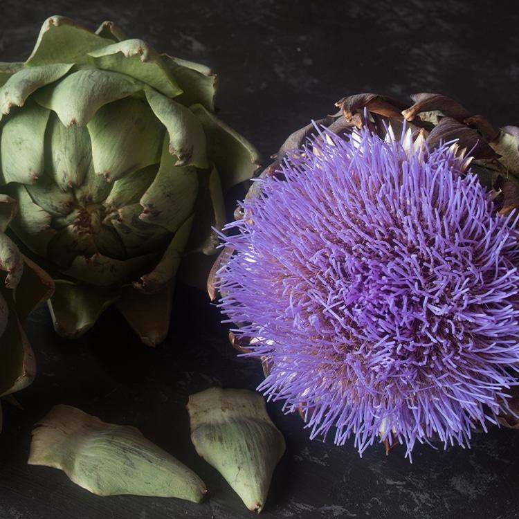 artichaut plante detox detoxification foie