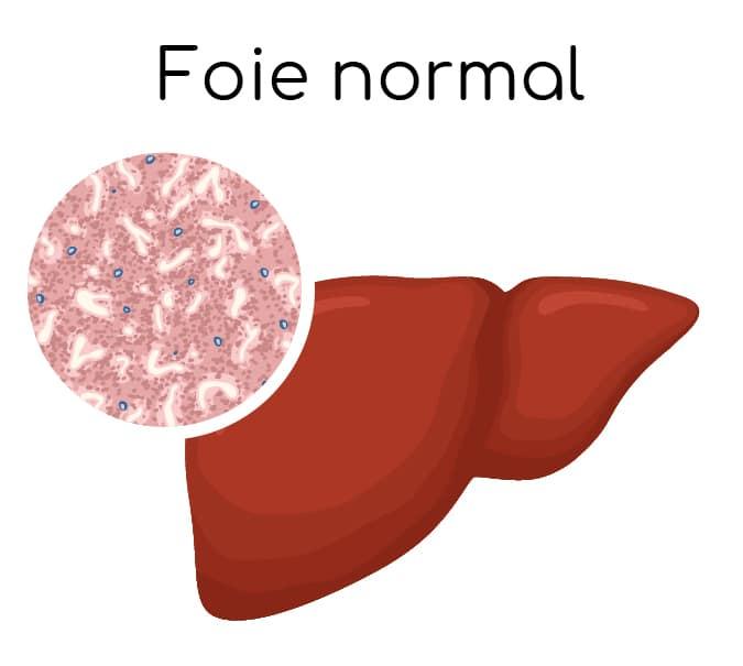 foie normal