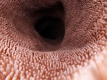 Representation 3D des villosités de la muqueuse intestinale.