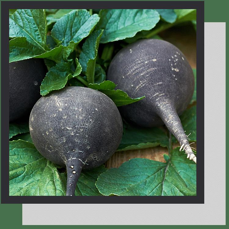 radis noir  index nutraceutique nutrixeal info