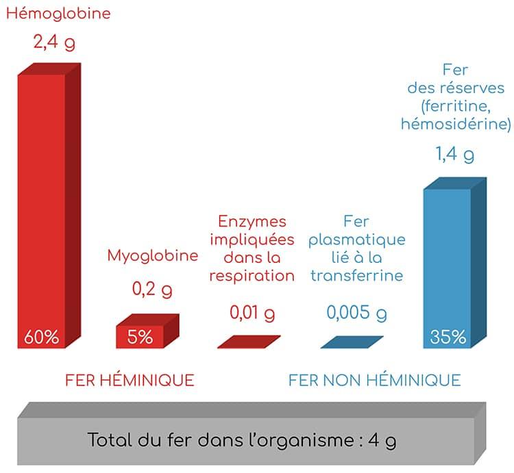 repartition du fer dans l'organisme nutrixeal info