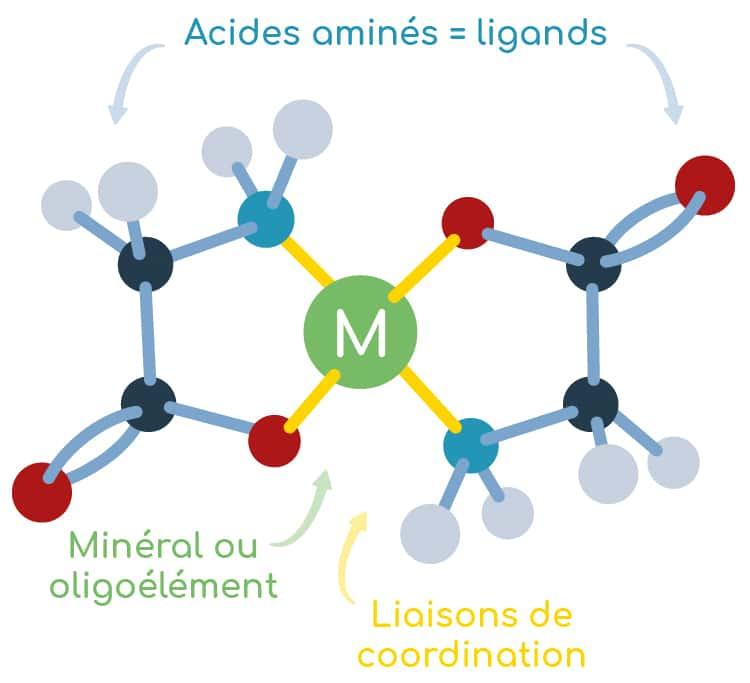 structure bisglycinate de magnesium