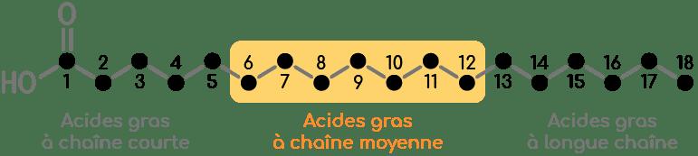 acides gras longueur chaine carbonée nutrixeal info v2