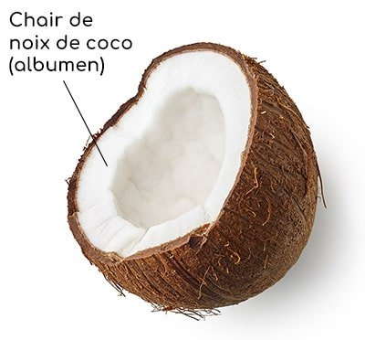 Chair de noix de coco (albumen) Nutrixeal Info