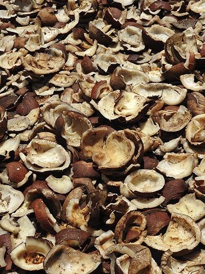 Coprah, déchats de noix de coco. Nutrixeal Info.