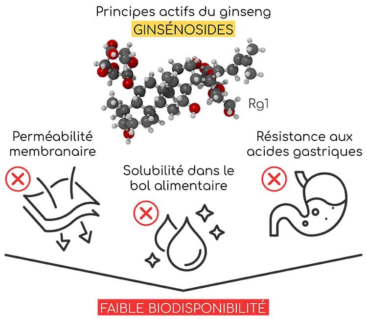 faible biodisponibilite des ginsenosides nutrixeal info