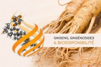 Ginseng : biodisponibilité des ginsénosides Nutrixeal info