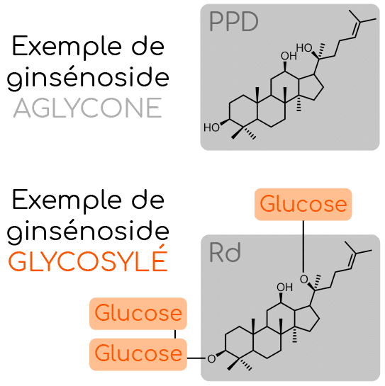 ginsenoside glycosylé et aglycone nutrixeal info