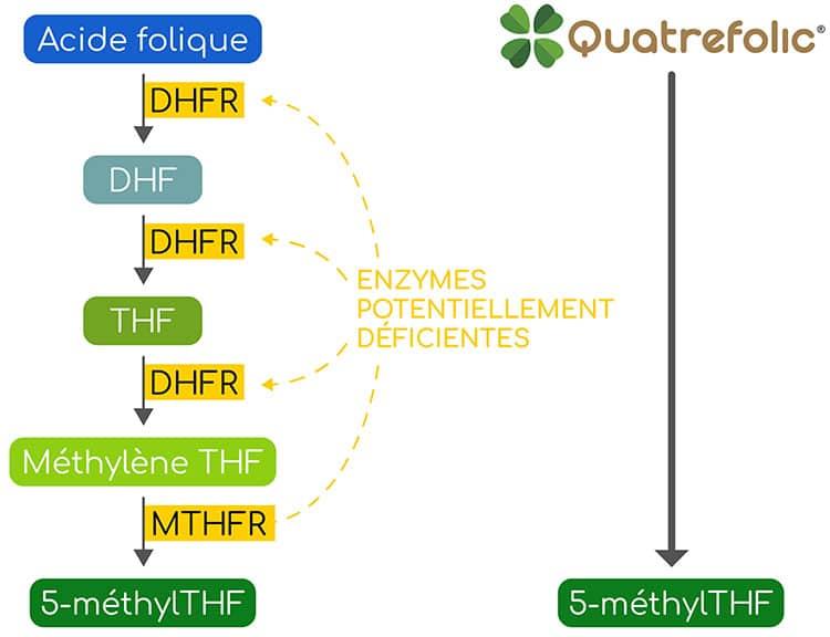 quatrefolic VS acide folique nutrixeal info