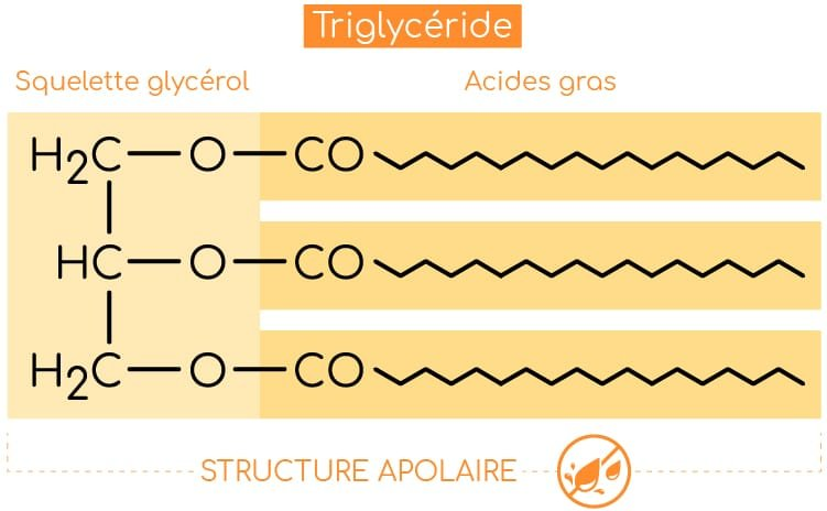 structure triglyceride nutrixeal info