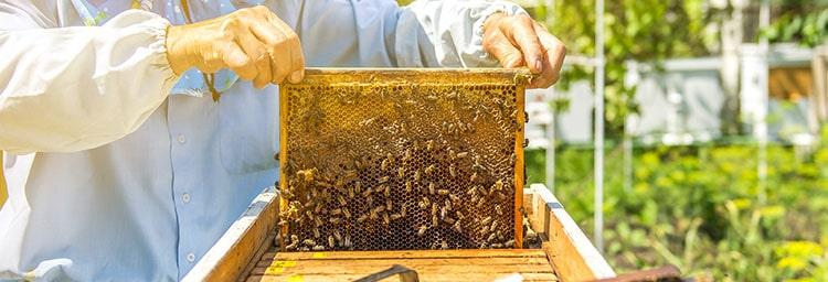 propolis apiculteur Nutrixeal Info