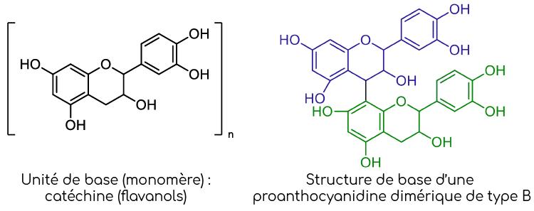 structure oligo-proanthocyanidines nutrixeal info