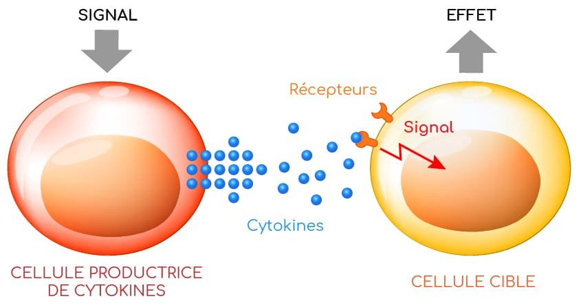 cytokines modes action Nutrixeal Info