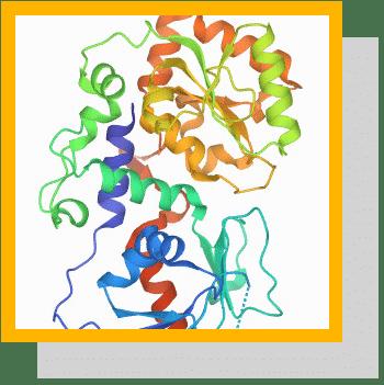 fucosyltransferase 2 fut2 index physiologique nutrixeal info