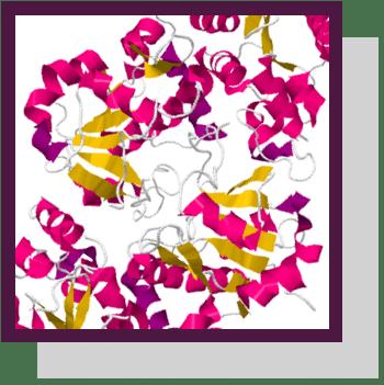 fucosyltransferase fut1 fut2 index physiologique Nutrixeal Info