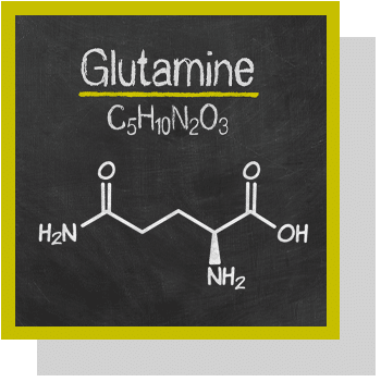 glutamine index nutraceutique Nutrixeal Info
