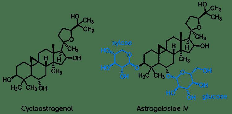 saponines triterpéniques astragale Nutrixeal Info
