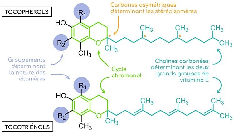 vitamine E structure tocopherols et tocotriénols Nutrixeal Info