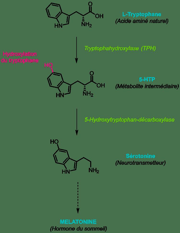 5-htp serotonine et melatonine Nutrixeal Info