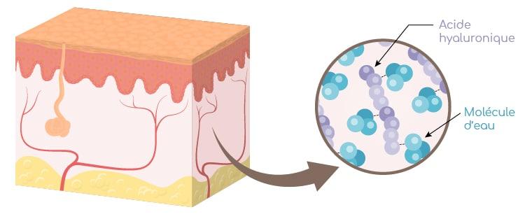 nutricosmétique : acide hyaluronique et hydratation du derme Nutrixeal Info