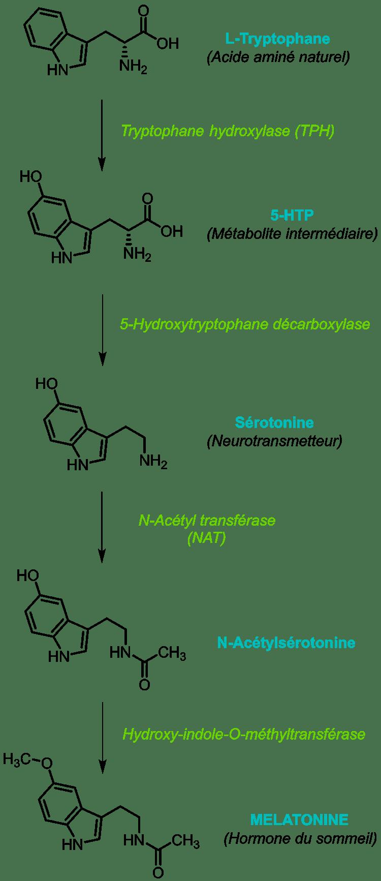 biosynthese melatonine nutrixeal info