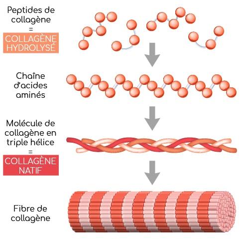 peptides de collagene et collagene natif Nutrixeal Info