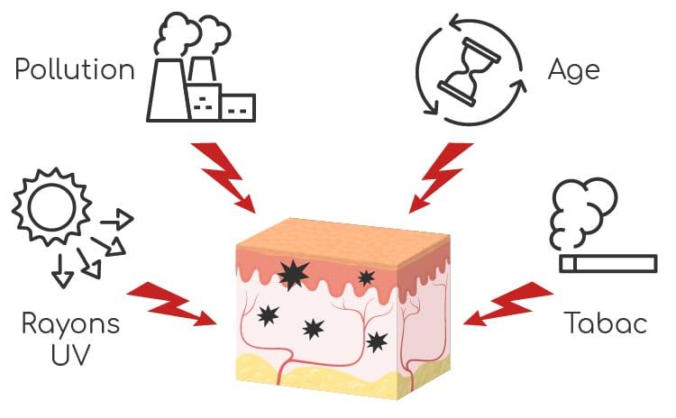 stress oxydatif peau facteurs - Nutrixeal Info