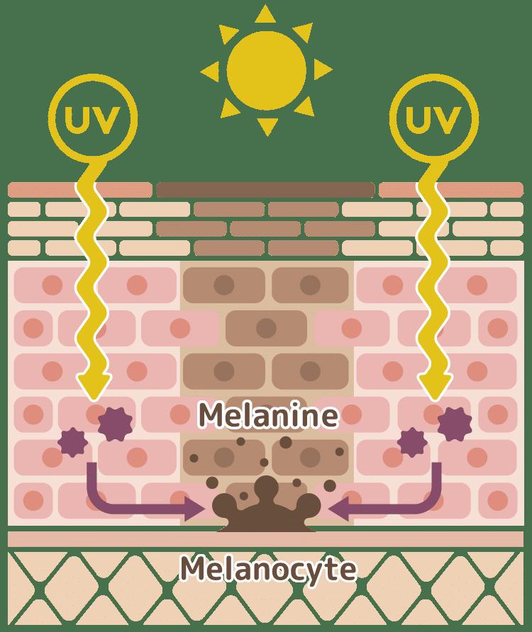 melanine et exposition au soleil - Nutraceutique nutrixeal info