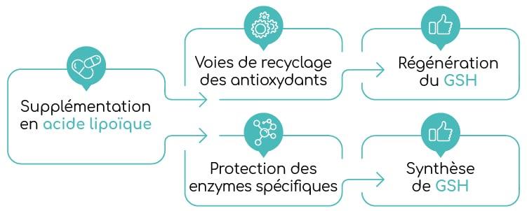 Acide lipoique et glutathion Nutrixeal Info